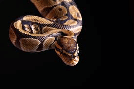 python classe